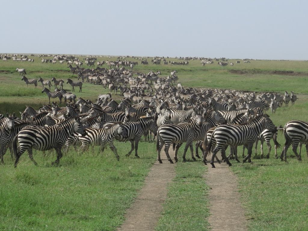 Wildebeest-Migration-