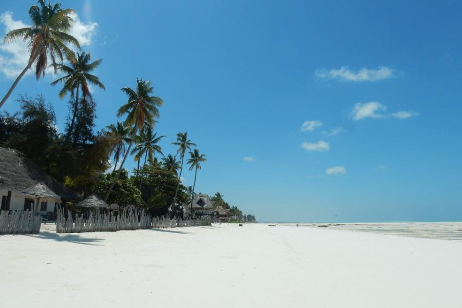 palm tree in zanzibar beach