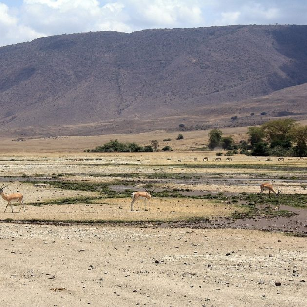 antelope at ngorongoro crater
