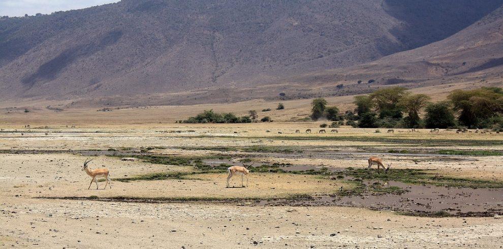 antelope at ngorongoro crater